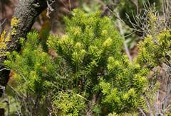 guia conservacion suelo forestal: