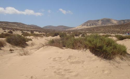El cardonal tabaibal blog biolog a y geolog a 4 eso 2 for Pisos de vegetacion canarias